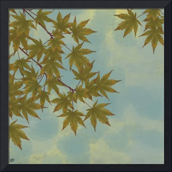 green maple sky 12x12 image
