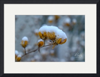 Winter Flowers by D. Brent Walton