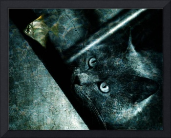 Abyss cat