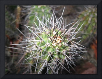 arizona flora and fauna (13)