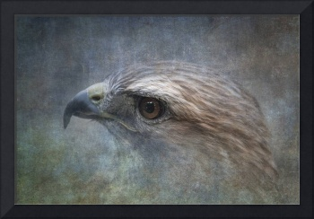 Painterly View of a Red Tailed Hawk