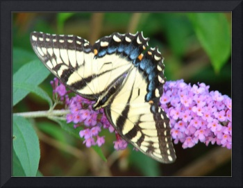 Yellow Butterfly + Butterfly Bush