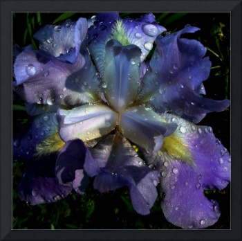 11x10 rtptik as 300dpi  blue iris top