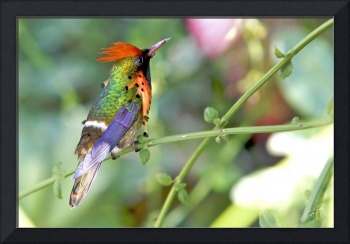 Humming Bird-13 copy