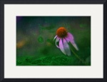 Bowing Cone Flower by D. Brent Walton