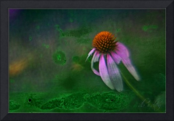 Bowing Cone Flower