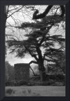 Haunting Tree and Guard Tower