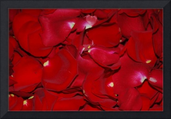 Red Rose Pedals
