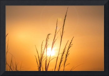 Sunrise behind Wild Oats Jacksonville Beach