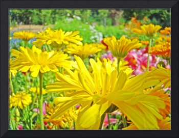Daisies Field art prints Yellow Daisy Flowers
