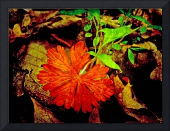 Enhanced Wild Geranium Leaf - Red