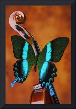 Violin with green black butterfly