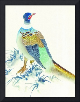 Chinese Blue Pheasant