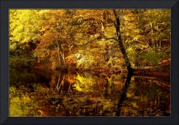 Autumnal Reflections