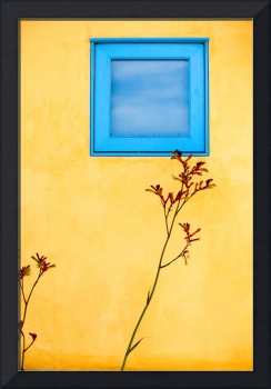 Window and Wall Flower