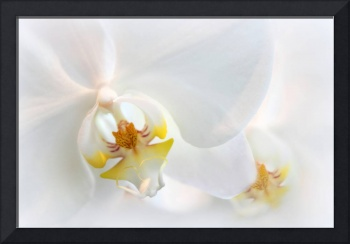 Orchid Echo
