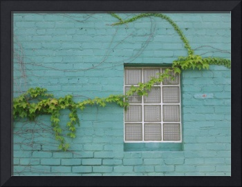 Blue Wall and Vine in Kansas City (Closeup)