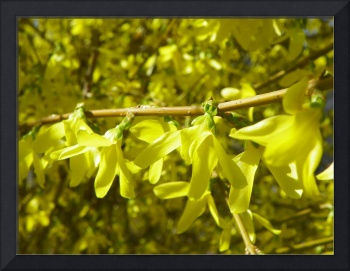 Spring in Yellow