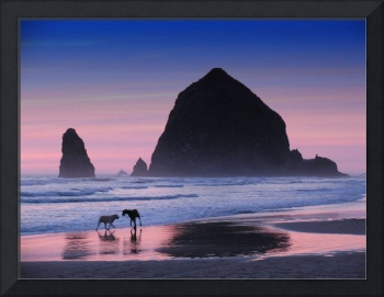 cannon beach dogs