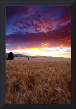 Wheat Field Sunset Storm