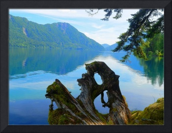 Art Of Nature - Olympic National Park