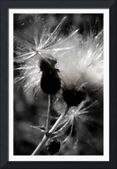 Going To Seed    0362 Desaturated Edit