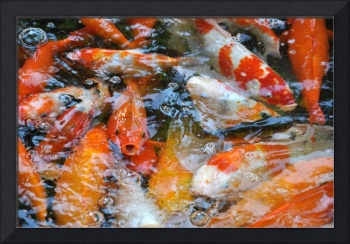 Too Crowded Fish Pond