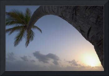 Curved Palm Tree At Sunset Dominican Republic