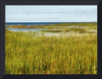 Coastal Wetlands