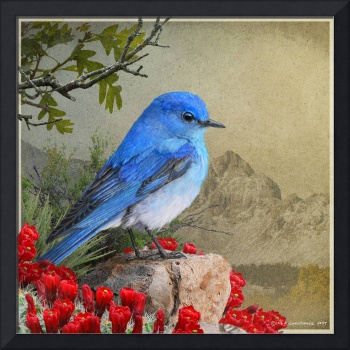mountain bluebird and claret cup