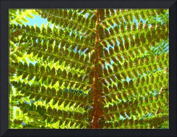 Fern art prints Green Forest Ferns Baslee Troutman
