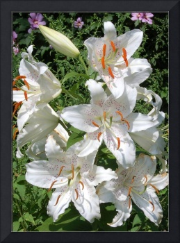 Bella White Lillies Photo