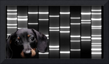 Pet Portraits DNA Art on Canvas - Black