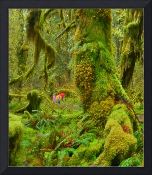 Seeing the Hoh Rain Forest in a dream