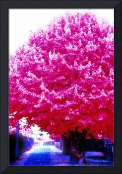 Beautiful Linden Trees Infrared