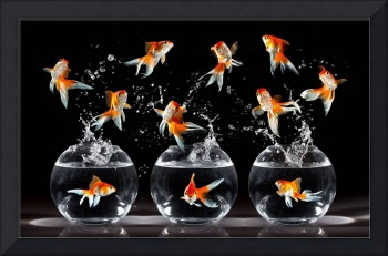 Goldfish A Jumping Into Goldfish Bowls
