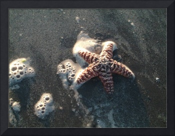 Seastar in Surf