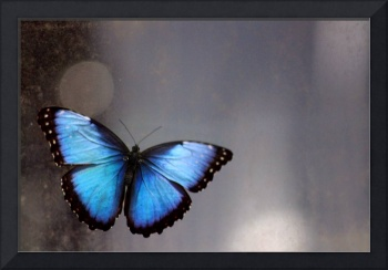 Blue Butterfly Dreams