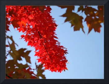 Red Leaves art Fall Trees