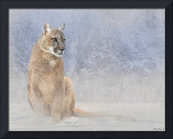 Mountain Lion in Winter Landscape
