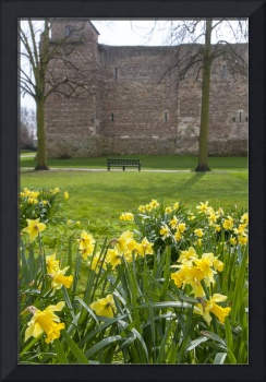Daffodils at Castle Park