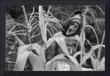 Scary Cornstalks in Black and White