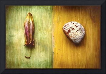 lily and shell collage