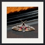 Nature's Disguise - Eyed Sphinx Moth 3348 by Jacque Alameddine