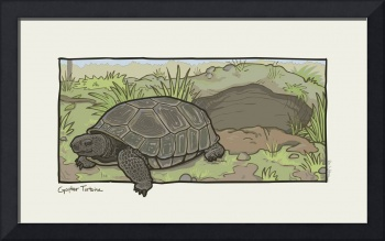 Florida Critter: Gopher Tortoise