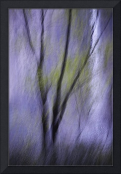 Abstract of tree and Bridalveil Fall