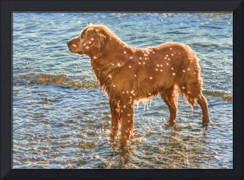 Brown Dog at Shore of Sea