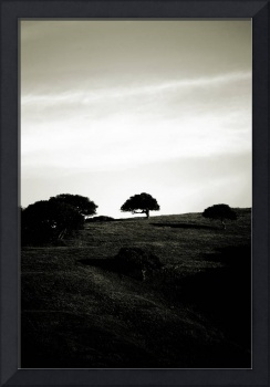 The little tree on the Hill