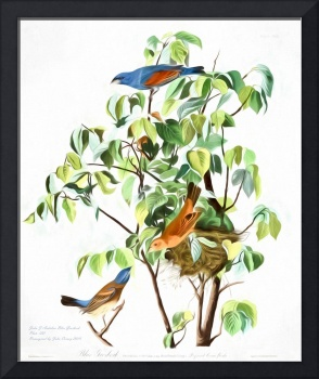 John Audubon Blue Grosbeak Reimagined
