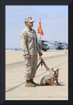 U.S. Marine and the official mascot for Marine Cor